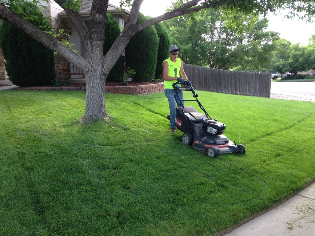 Hy Roots Lawn Mowing Service Care
