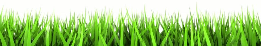 Green grass wide