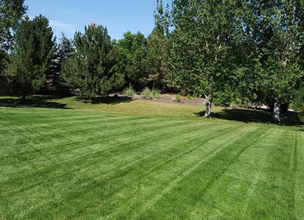 Fertilizer, Thornton, Colorado, Lawn Care