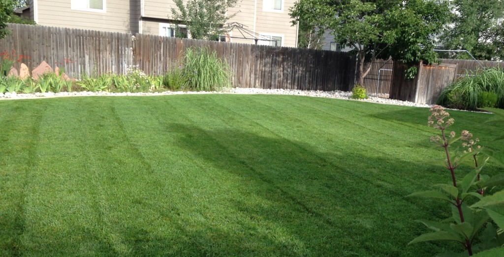 Fertilizer, Broomfield, Colorado, Lawn Care