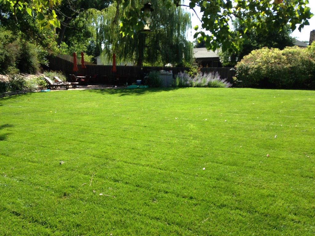 Fertilizer, Reunion, Colorado, Lawn Care